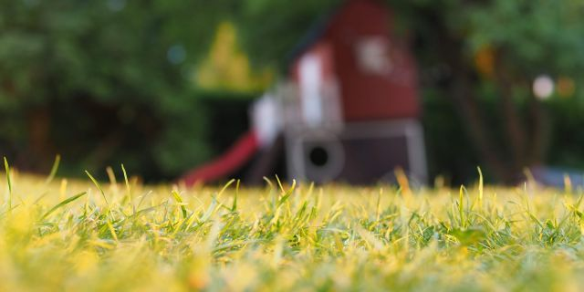 backyard-blur-depth-of-field-1600.jpg