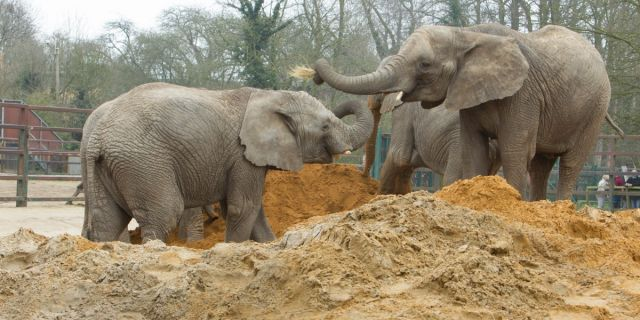 elephants1200.jpg