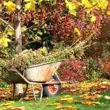autumngardentidy.jpg